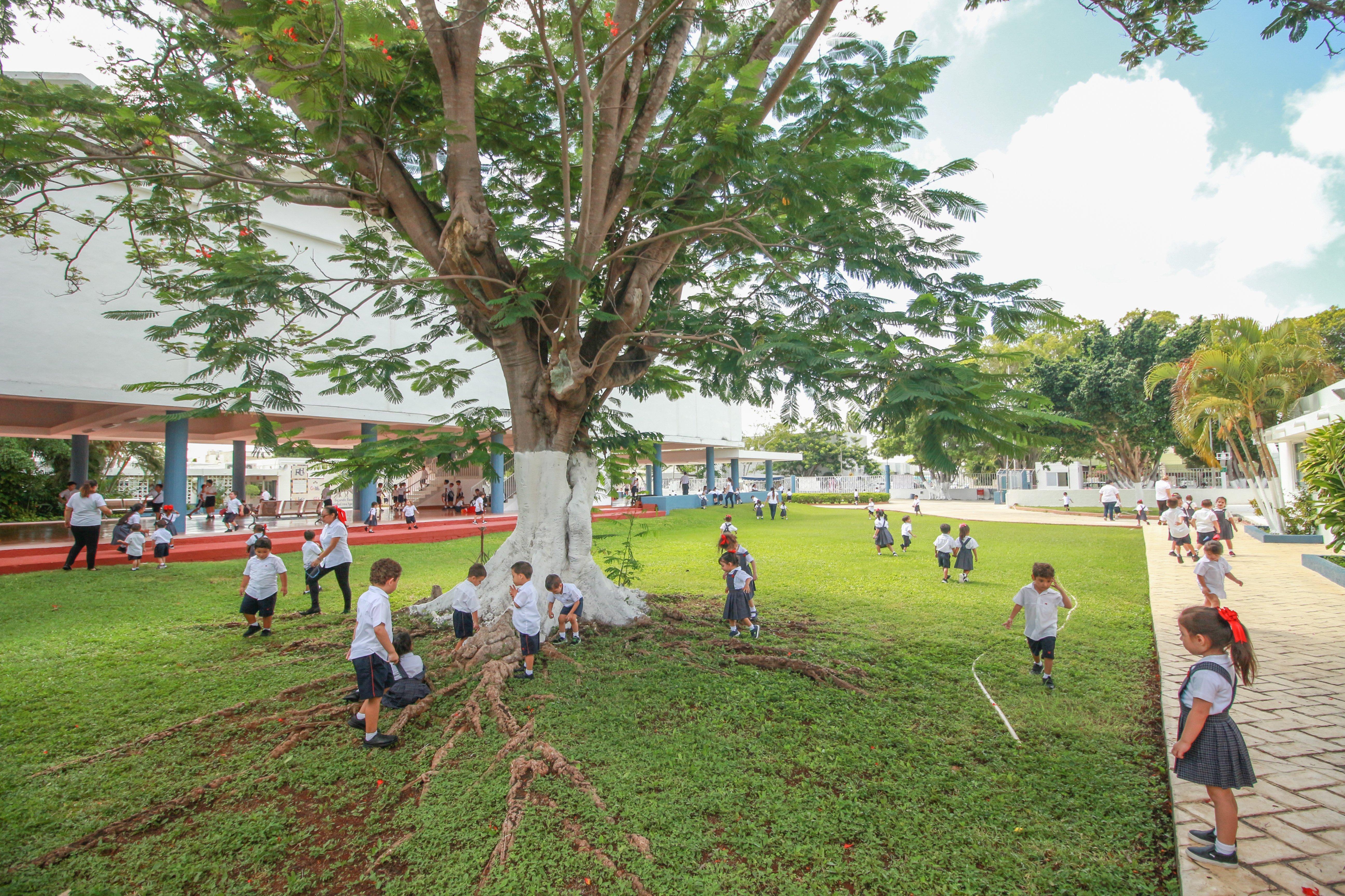 escuela  colegio  estudiar  Rogers + Mérida mejores escuelas primarias privadas en merida yucatan colegios bilingues en merida yucatan colegios privados en merida Orgullo rogers familia Rogers Alma mate Rogers hall